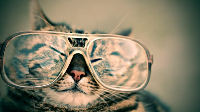 Smiling tabby cat with 80s style eye glasses with clear frames